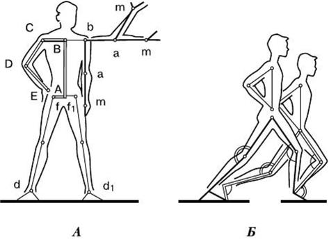 К числу суставов с тремя степенями свободы относят артроз плечевого сустава медикаментозное лечение